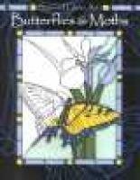 Butterflies & Moths (Paperback): Press Tangerine