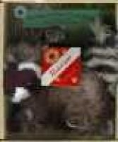 Raccoon at Clear Creek Road (Hardcover, illustrated edition): Carolyn Otto