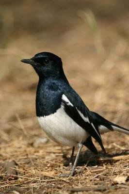 Oriental Magpie Robin Bird Journal - 150 Page Lined Notebook/Diary (Paperback): Cool Image