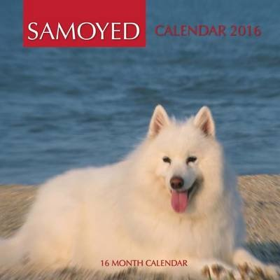 Samoyed Calendar 2016 - 16 Month Calendar (Paperback): Jack Smith