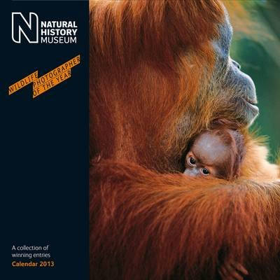 Official Natural History Museum (Wildlife) 2013 Calendar (Calendar):