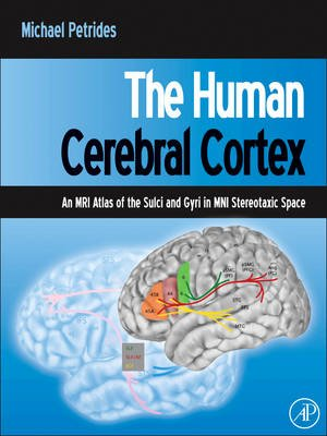 The Human Cerebral Cortex - An MRI Atlas of the Sulci and Gyri in MNI Stereotaxic Space (Hardcover): Michael Petrides