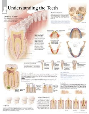 Understanding the Teeth Laminated Poster (Poster): Scientific Publishing