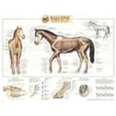 Equine Skeletal System Anatomical Chart (Wallchart): Anatomical Chart Company