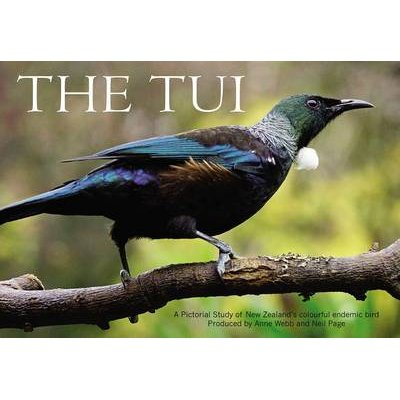 The Tui - A Pictorial Study of New Zealand's Colourful Endemic Bird (Paperback): Anne Webb, Neil Page