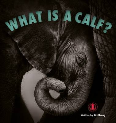 What is a Calf? (Paperback): Siri Urang