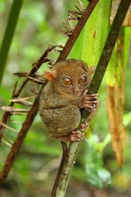 Tarsier Journal - 150 Page Lined Notebook/Diary (Paperback): Cool Image