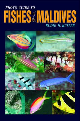 Photo Guide to Fishes of the Maldives (Paperback, 1998 ed.): Rudie H. Kuiter