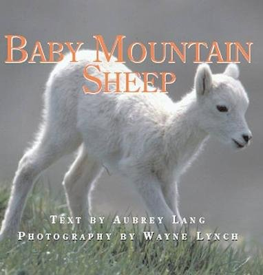 Baby Mountain Sheep (Hardcover): Aubrey Lang