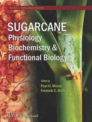 Sugarcane - Physiology, Biochemistry and Functional Biology (Hardcover): Paul H. Moore, Frederik C Botha