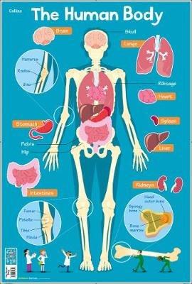 looseleaf for human anatomy