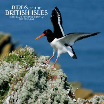 Birds of the British Isles 2008 Square Wall - Wall (Calendar):