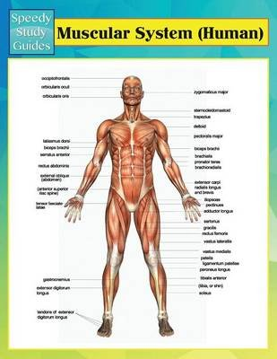 Muscular System (Human) (Speedy Study Guides) (Paperback): Speedy Publishing LLC