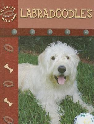 Labradoodles (Electronic book text): Lynn Stone