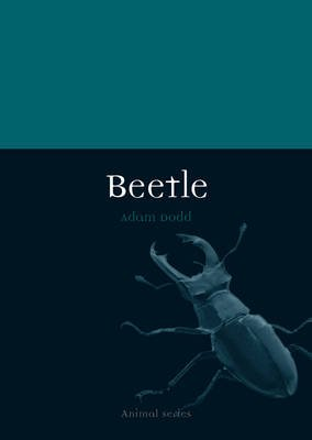 Beetle (Paperback): Adam Dodd
