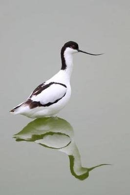 Pied Avocet Bird Journal - 150 Page Lined Notebook/Diary (Paperback): Cool Image