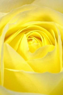 Yellow Rose Journal - Blank 200 Page Journal (Paperback): Dibiasio Publications