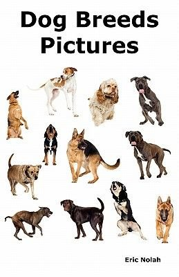 Dog Breeds Pictures - Over 100 Breeds Including Chihuahua, Pug, Bulldog, German Shepherd, Maltese, Beagle, Rottweiler,...