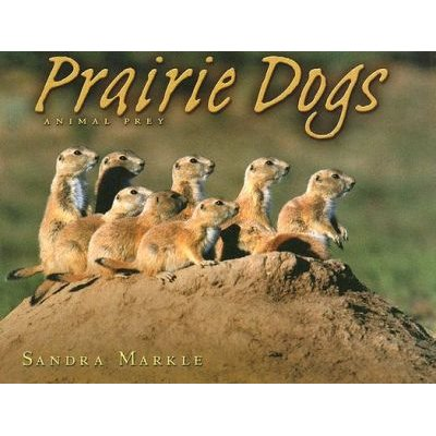 Prairie Dogs - Animal Prey (Hardcover, Library binding): Sandra Markle