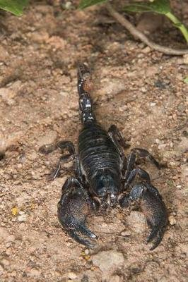 Emperor Scorpion (Pandinus Imperator) in Accra Ghana Journal - 150 Page Lined Notebook/Diary (Paperback): Cool Image