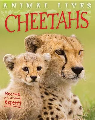 Cheetahs (Hardcover): Sally Morgan