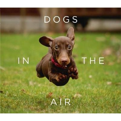 Dogs in the Air (Hardcover): Jack Bradley