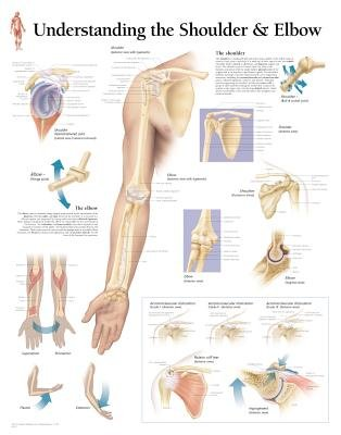 Understanding the Shoulder & Elbow Laminated Poster (Poster): Scientific Publishing