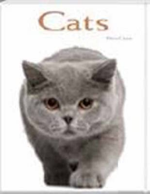 Cats: Pocket Book (Hardcover): Flavia Capra