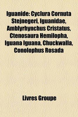 Iguanid - Cyclura Cornuta Stejnegeri, Iguanidae, Amblyrhynchus Cristatus, Ctenosaura Hemilopha, Iguana Iguana, Chuckwalla,...