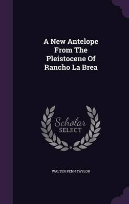 A New Antelope from the Pleistocene of Rancho La Brea (Hardcover): Walter Penn Taylor