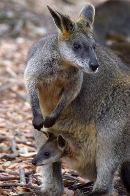 Wallaby with Joey in Pouch Journal - 150 Page Lined Notebook/Diary (Paperback): Cool Image