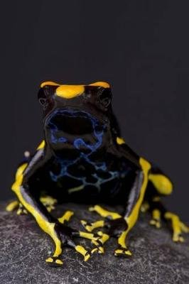 Dart Frog (Dendrobates Tinctorius) Journal - 150 Page Lined Notebook/Diary (Paperback): Cool Image