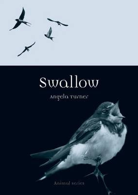 Swallow (Paperback): Angela Turner