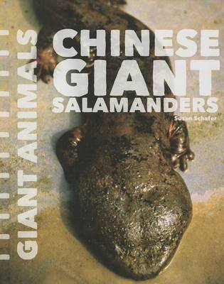 Chinese Giant Salamanders (Hardcover): Susan Schafer