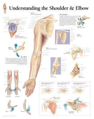 Understanding the Shoulder & Elbow (Wallchart): Scientific Publishing