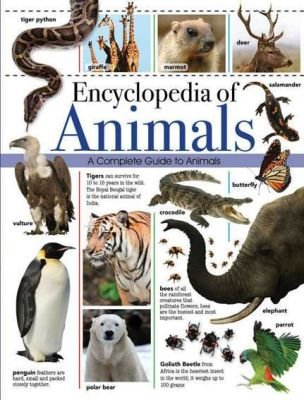 Encyclopedia Of Animals - A Complete Guide To Animals (Hardcover):