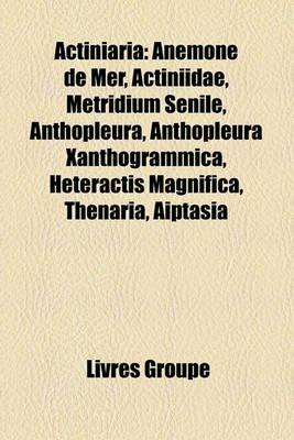 Actiniaria - Anmone de Mer, Actiniidae, Metridium Senile, Anthopleura, Anthopleura Xanthogrammica, Heteractis Magnifica,...