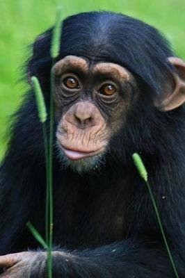 Say Hello to the Baby Chimpanzee Journal - 150 Page Lined Notebook/Diary (Paperback): Cool Image