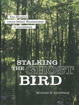 Stalking the Ghost Bird - The Elusive Ivory-Billed Woodpecker in Louisiana (Hardcover): Michael K. Steinberg